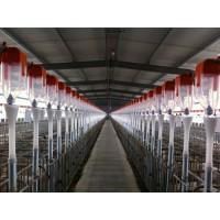 成都自动喂料设备生产订制/开元畜牧质量可靠值得信赖
