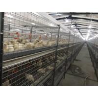 肉鸡笼养设备山东肉鸡笼养设备厂家现代化肉鸡笼养设备价格