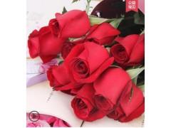 卡罗拉红玫瑰鲜切花批发